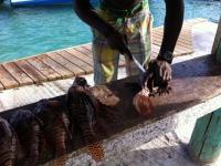 Grenadines en St Vincent
