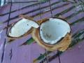 Na het lekkere kokossap gedronken te hebben, heerlijk de kokos uitlepelen