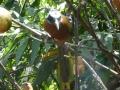 Mooie vogels in vele kleuren