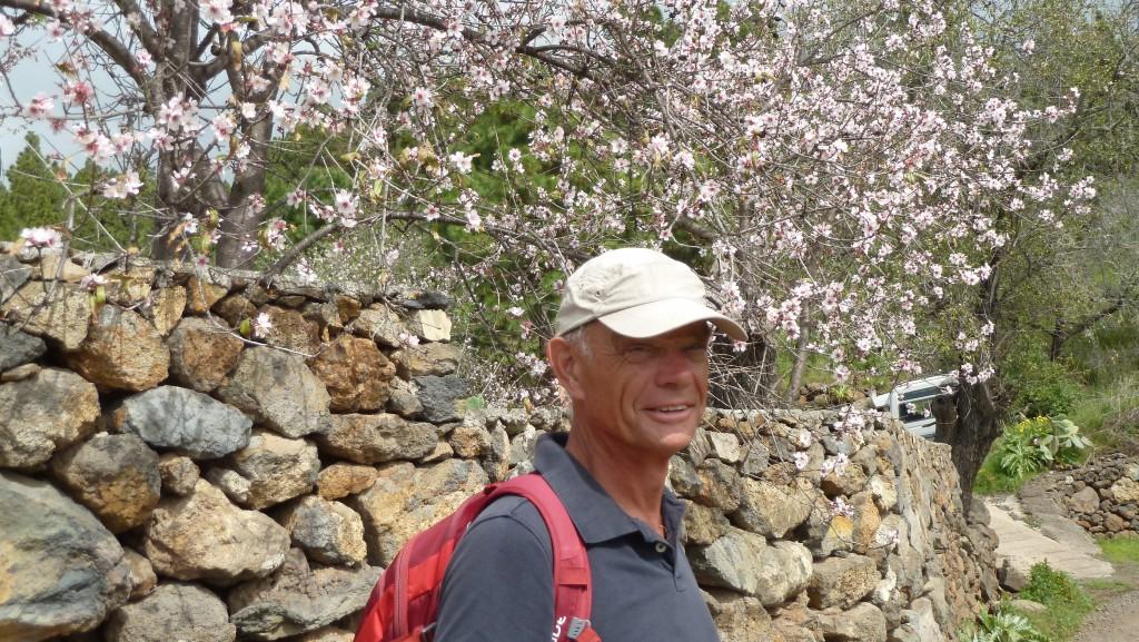 Prachtig bloeiende amandelboom op een van onze wandelingen